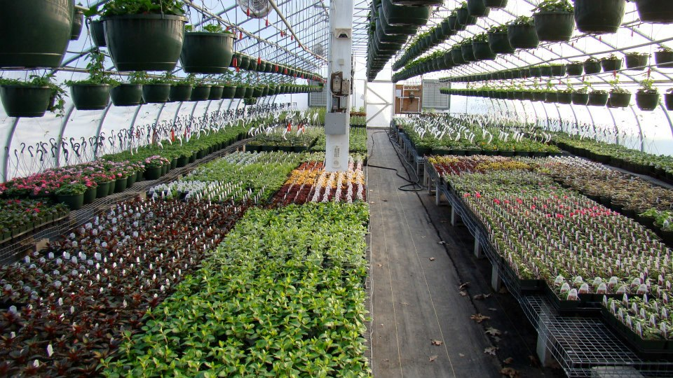Growing Annuals