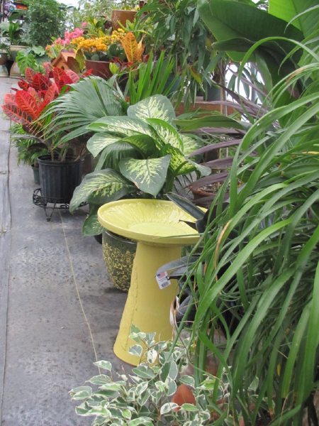 Houseplants and Bird Bath