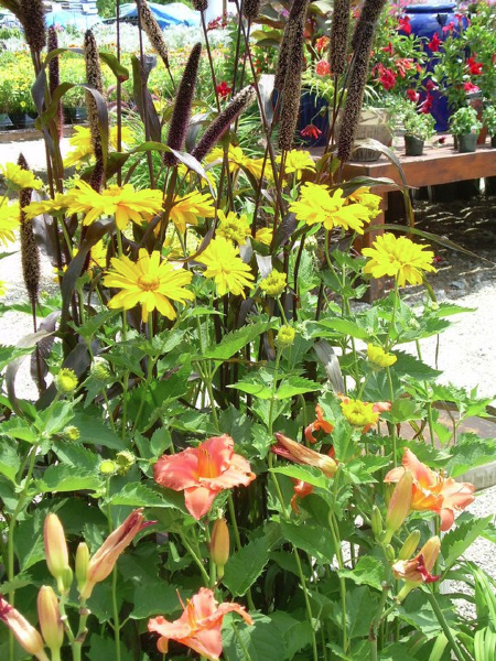 fall-planter