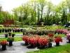 nursery-yard-with-azaleas