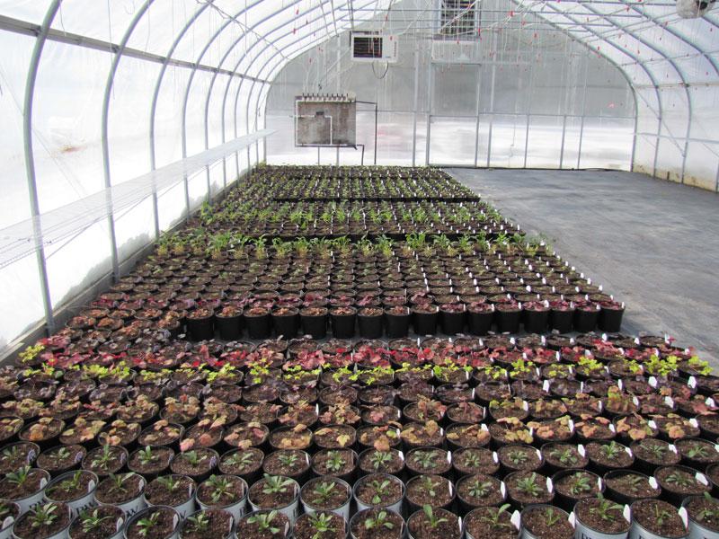 Growing Perennials